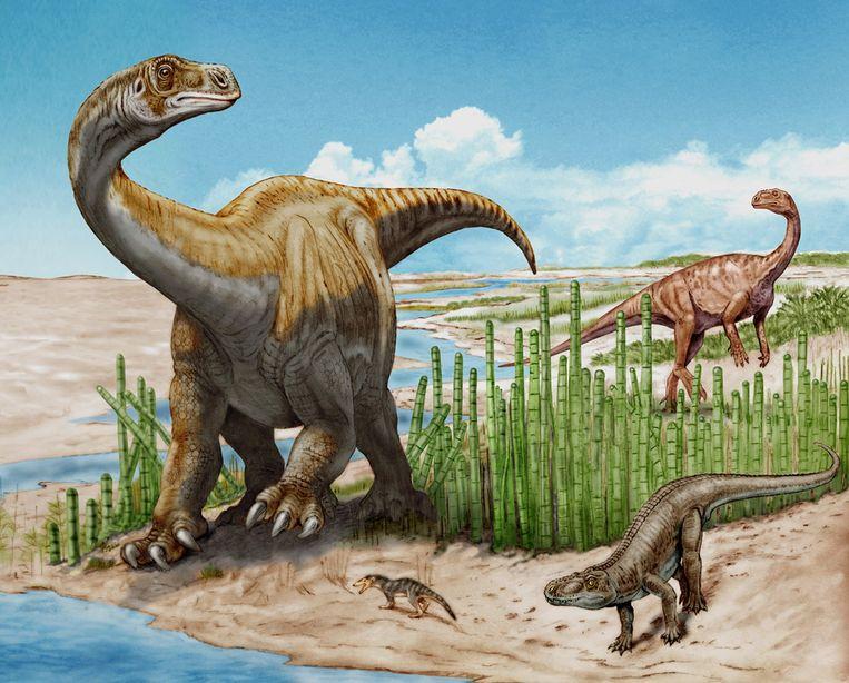 Een illustratie van hoe de Schleitheimia schutzi er zou uitgezien hebben (links).