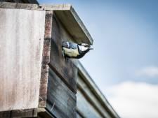 Nergens méér vogelaars, nergens minder vogels dan in Antwerpse tuinen