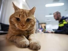 Hemels leventje voor Garfield op het politiebureau van Delft