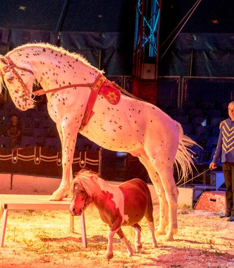 Circus Renz slaat tenten op in Arnhem