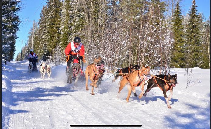 Stefan Donker met zijn honden op weg naar de Europese titel Sledehondenrennen.