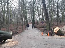 Bezorgde telefoontjes: 'Is bos  Duivelsberg al veilig?'