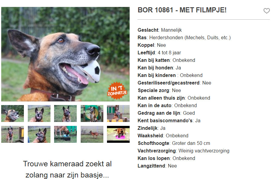 Op de website Ik Zoek Baas wordt Bor in het zonnetje gezet om extra aandacht te vragen voor hem.