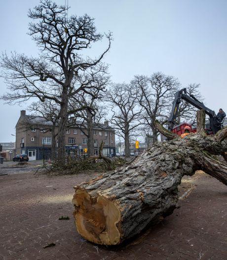 Veertien oude bomen  gekapt: 'We hebben vanochtend staan huilen'