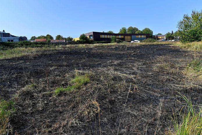 Het grasveld aan de Wouwsestraatweg ging vermoedelijk in vlammen op door illegaal afgestoken vuurwerk.