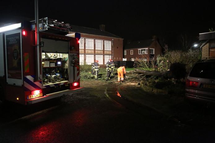 Op de hoek van de Azaleastraat met de Ericastraat in Roosendaal is dinsdagnacht een boom omgewaaid. De brandweer heeft de boom klein gezaagd.