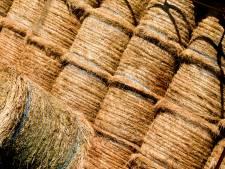 Geen illegale fouragehandel op boerderij Doornspijk