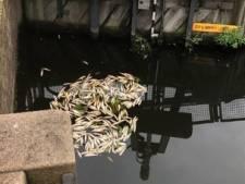 Groep dode vissen bij sluis tussen Kralingse Plas en Rotte 'een vervelend gezicht'