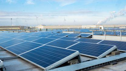 """Aliplast installeert 3.650 zonnepanelen: """"Energieproductie komt overeen met verbruik van 220 gezinnen"""""""