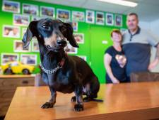 Dubieuze hondenhandel groeit, maar hoe kun je zo'n snuitje nou weerstaan?