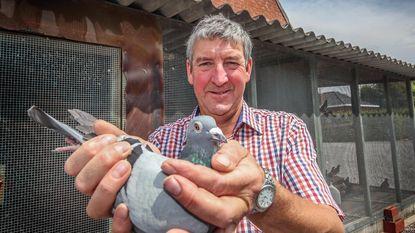 Vliegverbod duiven door pseudovogelpest