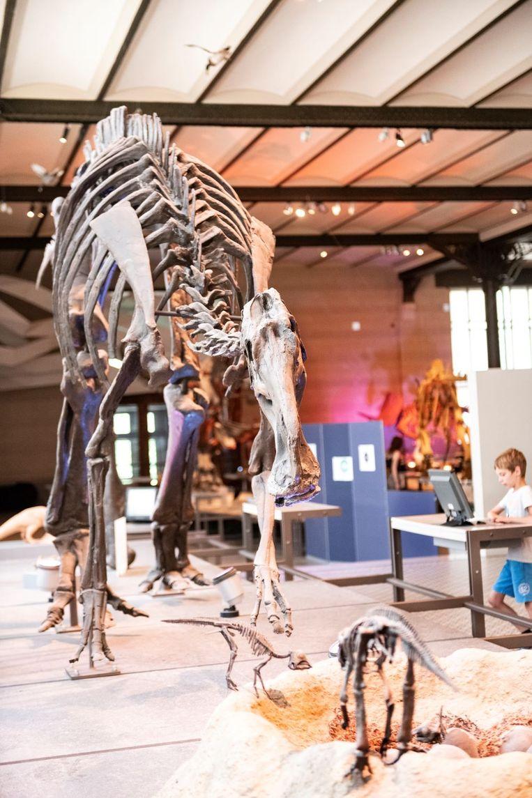 Het museum voor Natuurwetenschappen is zo groot dat je er bijna een hele dag kan rondlopen