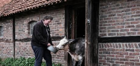Zuivel met een keurmerk komt van koeien in IJzerlo