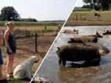 Is dit de mooiste modderpoel van Nederland?