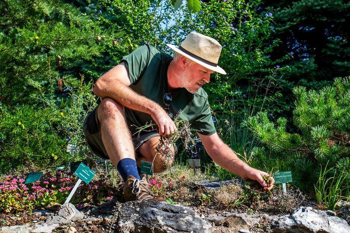 Gerard van Buiten (51), in het heetste stukje van de Botanische tuinen waar planten groeien die goed tegen hitte en droogte kunnen.