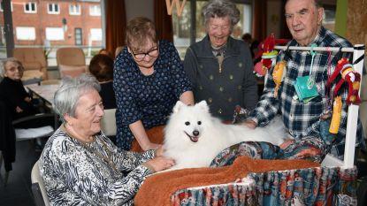 Een aaitje voor Otis van élke senior: knuffelkar brengt hondje op gelijke hoogte met gasten De Sleutelbloem