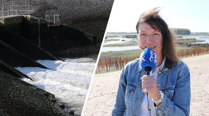 Verslaggeefster Sophie Stockman in Waterdunen.