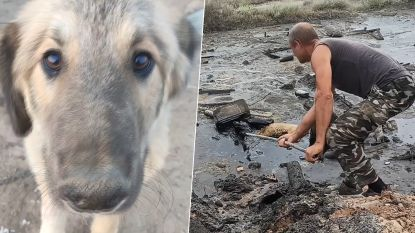 Arme hond plakt helemaal vol olie na bijna-verdrinking. Maar kijk hem nu!