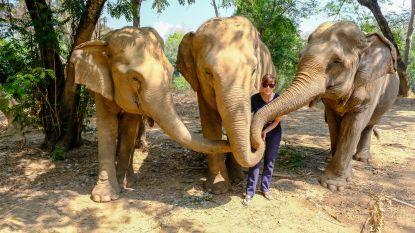 """Hannelore (43) redt olifanten in Thailand in haar vrije tijd en luidt alarmbel: """"Zonder toeristen is er geen geld om de dieren te voederen"""""""
