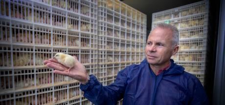 Deze kuikenboerderij in Veldhoven werkt volledig zonder aardgas