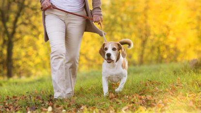 Een hond maakt gezond: baasjes hebben minder kans op hart- en vaatziekten