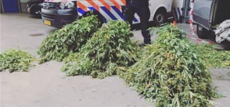 Bestelbus vol wietplanten ontdekt: twee mannen aangehouden