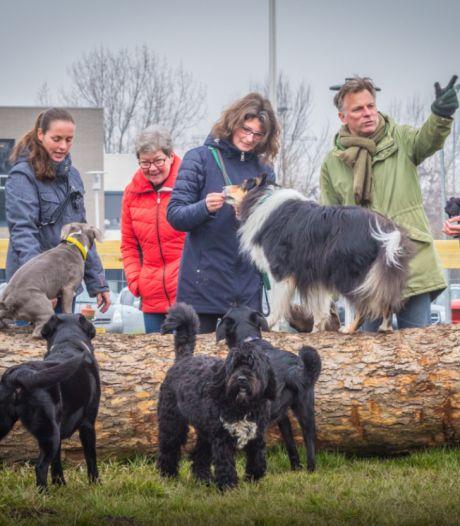 Petitie voor losloopgebied voor honden: 'Waar je zonder de auto te moeten pakken naartoe kan'