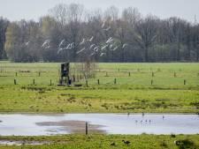 Ottershagen bij Tilligte weer populair bij weidevogels en hun jongen
