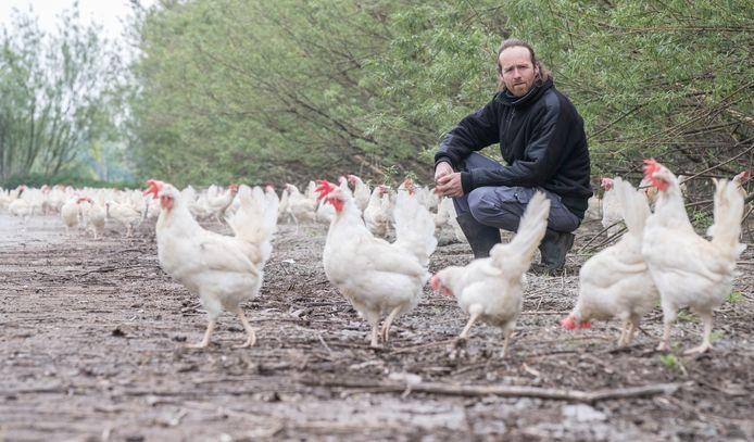De kippen van Léon Jansen uit Schore mogen weer naar buiten na de ophokplicht.
