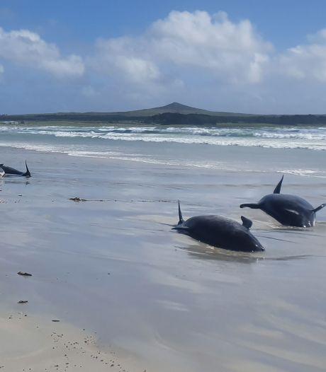 Massastranding in Nieuw-Zeeland: honderd dolfijnen overleden