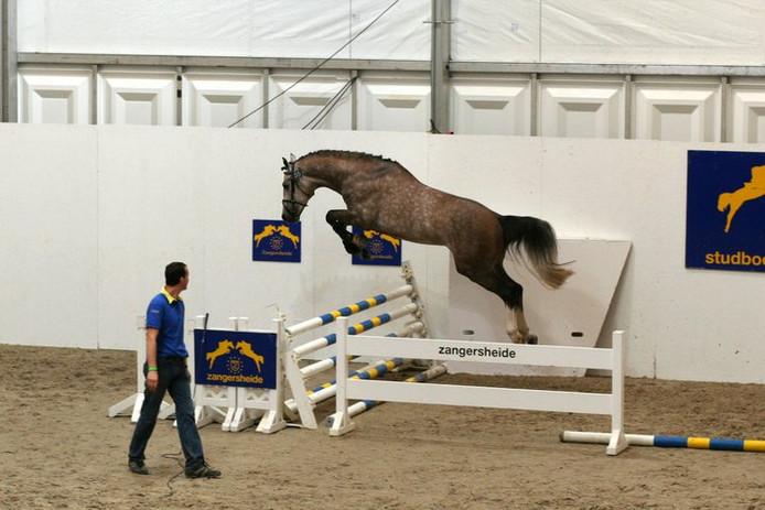 Het paard Cognac du Vlist heeft de derde Grand Prix van China gewonnen.