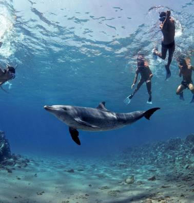 Vinden dolfijnen het eigenlijk wel leuk om met óns te zwemmen?