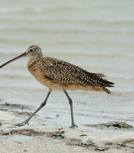 Worden onze beschermde vogels straks in Frankrijk afgeschoten?