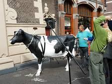 De koe hangt weer in de Nieuwe Toren