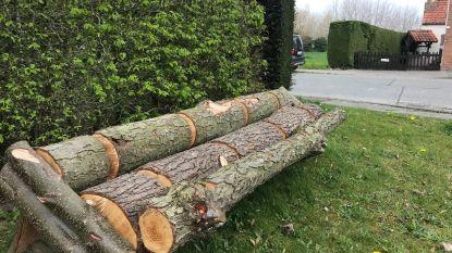 Knap staaltje recyclage: omgewaaide boomstam krijgt inkepingen en is nu fietsrek