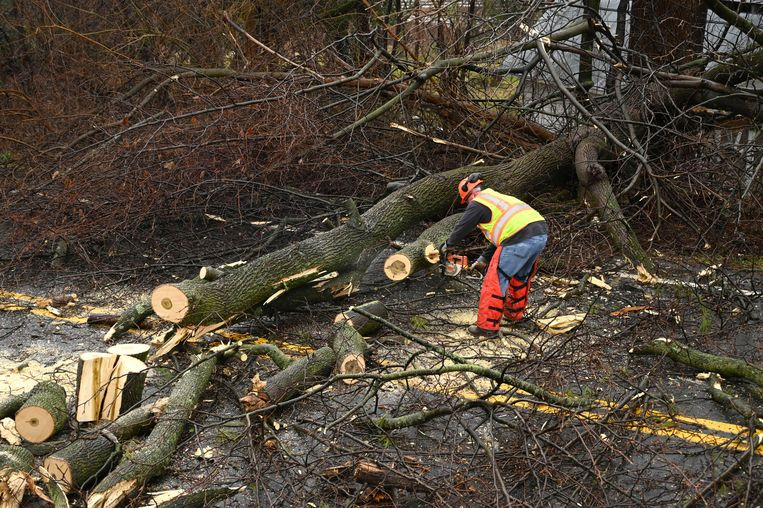 A Carroll County road crew clears a tree across Marston Road following a winter storm, Friday, Feb. 7, 2020, in New Windsor, Md. (Jerry Jackson/The Baltimore Sun via AP)