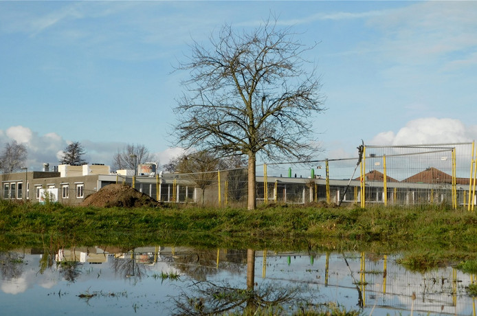 De Prinses Maximaboom bij het inmiddels gesloopte, voormalige verzorgingshuis Immanuël in 's-Gravendeel.