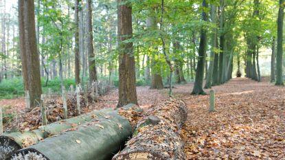 Groen&Co brengt toegankelijke bossen en trage wegen in kaart