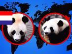 Zo krijg je een panda van de Chinezen