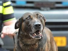 Politiehond Aras bijt vluchtende Tilburger (29) het ziekenhuis in: flink gewond aan  billen