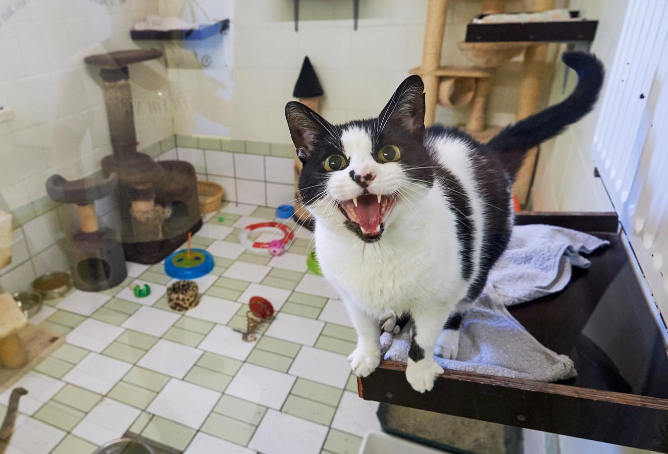 Deze kat in de opvang van HoKaZo oogt nog levendig genoeg.