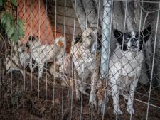 Honden van Rudi Lubbers al half jaar in Schaijk: 'hij is hier één keer geweest'