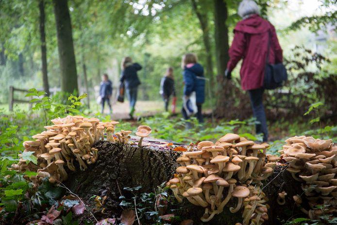 Wandelaars passeren paddenstoelen die momenteel volop in de bossen te vinden zijn. Vaak blijft het daar niet bij.