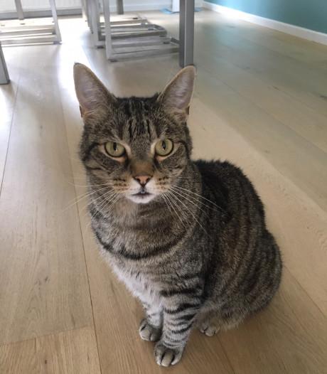 Na zes weken vermissing viert kat Mika uit Nuenen kerst gewoon thuis: 'Ik dacht dat hij dood was'
