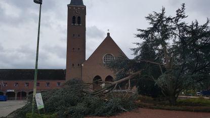 Bomen in Bergom sneuvelen door storm