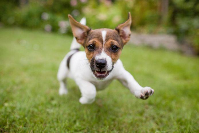 Illustratiebeeld - De honden zullen kunnen spelen in de hondenspeelweide aan domein de Ghellinck.