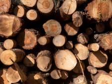 Kap gaat niet door: bomen Kemnaweg in Albergen moeten gewoon blijven staan