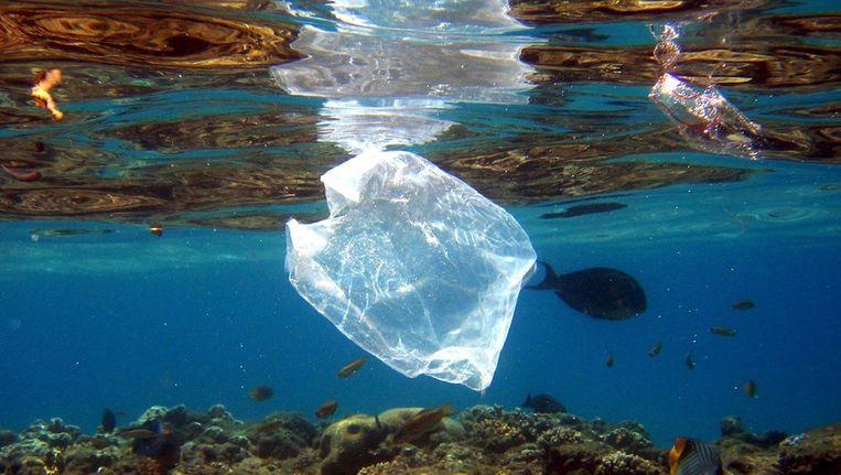 Plastic fungeert in de oceaan als een ecosysteem: een 'plastiphere'. Microbiële gemeenschappen leven op stukjes plastic. Beeld epa
