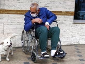 Trouwe hond in Turkije wacht dagenlang geduldig aan ziekenhuis op baasje