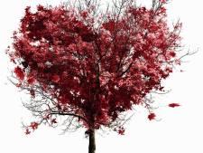 Inwoners Stichtse Vecht krijgen gratis boom